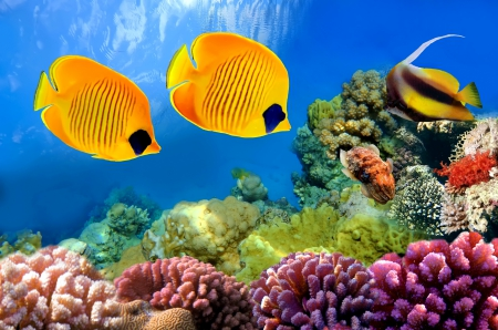 ♥Underwater♥ - tropical, fishes, underwater, ocean, coral, reef
