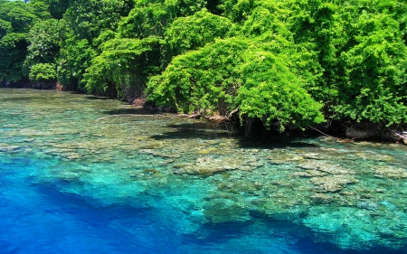 Kimbe Island, Papua New Guinea - marine biodiversity, sea, archipelago, rainforest, crystal waters, bay, trees