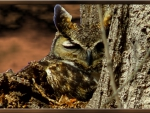 Sleepy Horned Owl