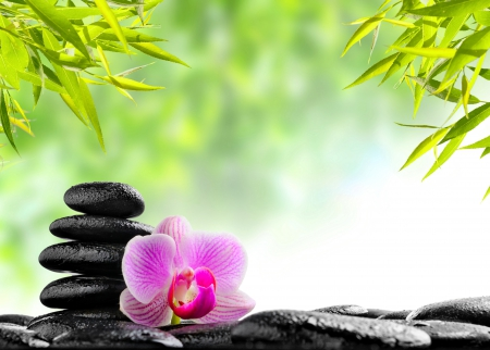 Relaxing spa flowers nature background wallpapers on - Decoration zen et nature ...