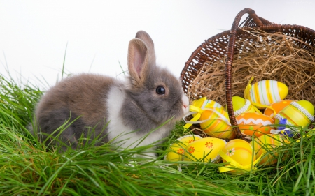 easter bunny other animals background wallpapers on