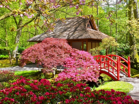 Japanese garden flowers nature background wallpapers for Flowers for japanese gardens