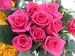Pink Roses Growing in a Pot with one Orange Rose