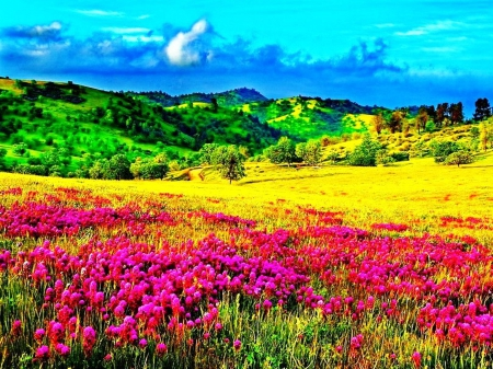 spring flowers on mountain meadow flowers amp nature