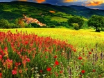 Wild flower fields on mountains in sunset