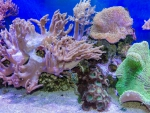 Tropical Sea Underwater Corals