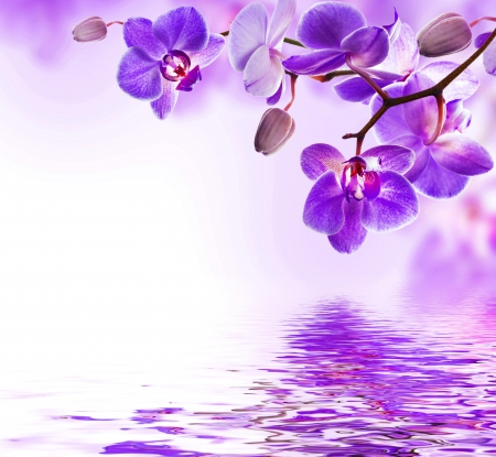 ��purple orchid�� flowers amp nature background wallpapers