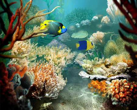 Tropical Fish - art, tropical fish, ocean floor, coral reef