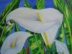 Calla Lilies on Blue