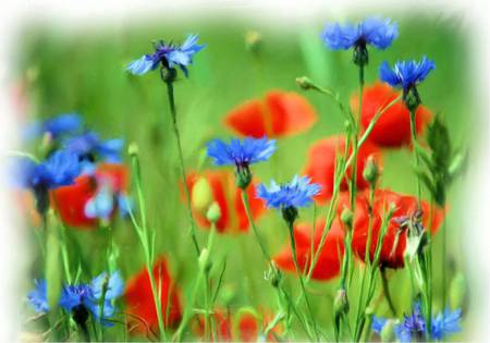 Meadow Flowers - wildflowers, flowers, art, meadow