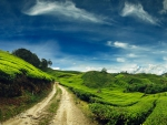 Beautiful Green Hills