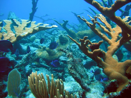 Coral Reef in St. Croix, US Virgin Islands - Oceans, Coral Reefs, Nature, Underwater