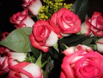 Angelika's roses