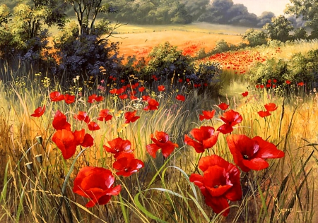 Bright Red Poppies F2mp