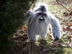 Unhappy Ewak (Ewok, chewbacca, Yeti or Abominable Snowman) ?