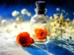..Flower in the Bottle..