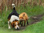 The worst hunting dog