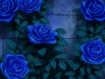 BP: Blue Rose