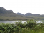 A Loch, some hills, and vibrant plants
