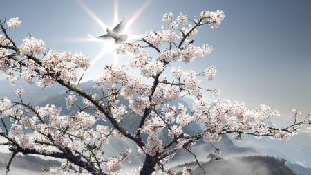 Spring Peace Wallpapers - Wallpaper Cave