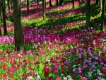 Forest full of flowers