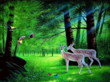 Enchanted forest - Grass Wallpapers and Images - Desktop ... - photo#9