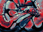 Abstract Spider Ball Python