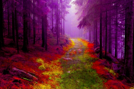 forest fairy wallpaper - photo #41
