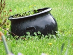 wet black kettle in grass with flowers