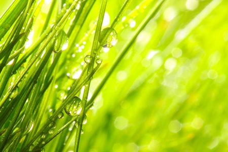 Drops - bokeh, grass, rainy, rain, splendor, green, drops, nature