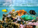 ♥Tropical Reef♥