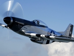 beautiful p51 mustang