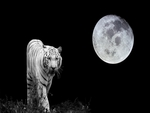 The white tiger and the moon