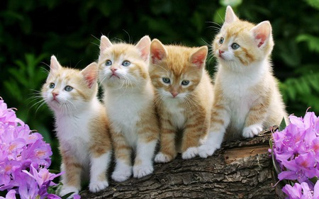 Kittens - kitties, cats