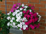 Summer Hanging Basket