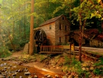 House Deep in the Forest, Norris Dam State Park, Tennessee