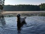 The dog In the Water