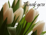 Tulips Thank You Card