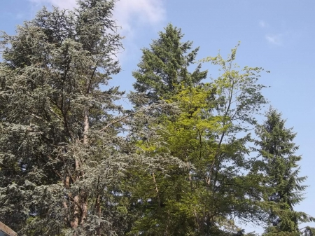 trees and blue sky - green, blue sky, clouds, trees