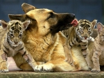 DOG AND CUBS