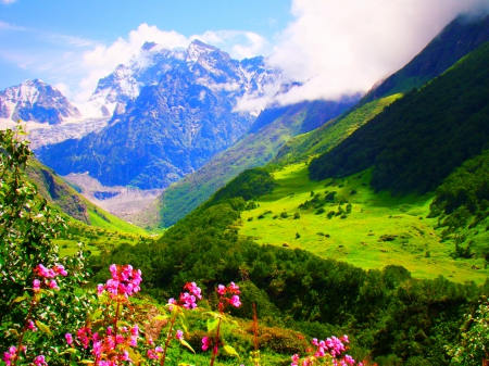 The Valley Of Flowers, Uttarakhand - Mountains & Nature ...