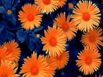 daisies_abstract effect