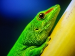 Close-up of green lizard