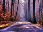 autumn forest road in focus