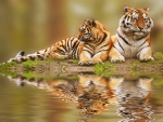 Tigers reflection