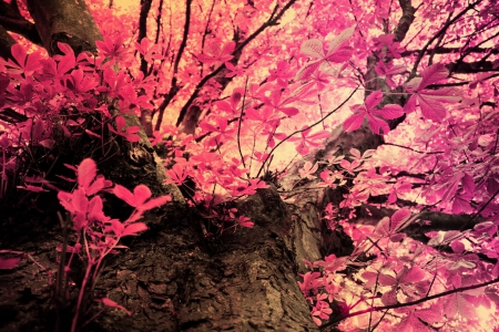 Download Pink Realtree Wallpaper Gallery  botherlandcom