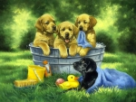 Bathing puppies