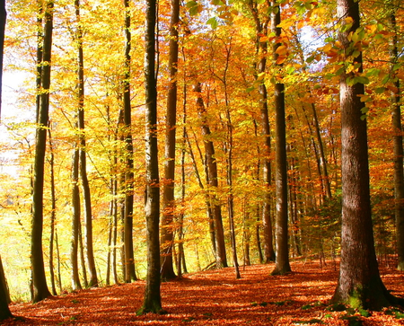 Elona Gay   Herbst   Autumn - splendor, colors color, wood, orange, autumn, leaves, beautiful place, forest, peaceful