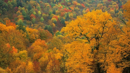 Autumn Forest - autumn, trees, nature, forests