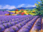 Lush fields of lavender